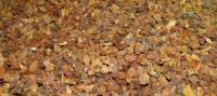 Somali Myrrh Incense