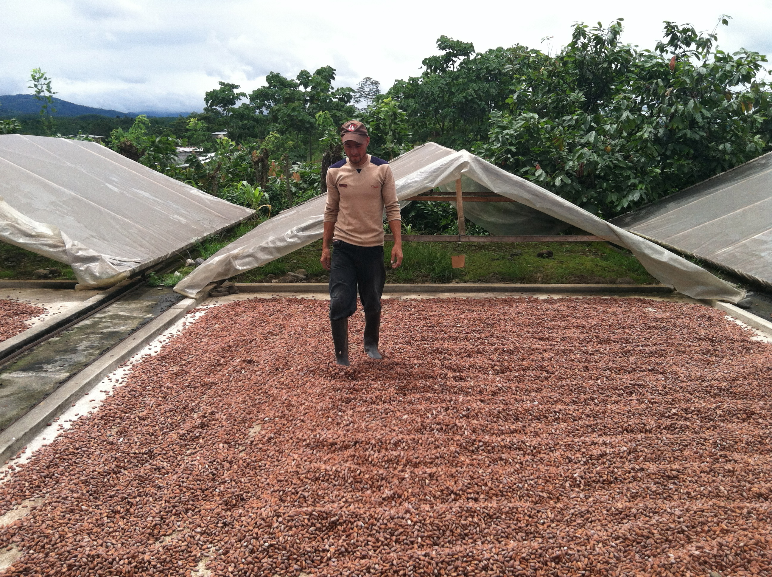 Rotating the drying cacao