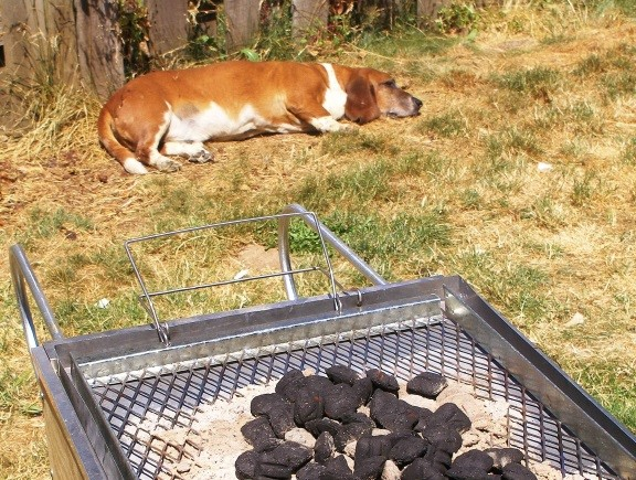My old Basset Hound, Phlash the Worthless, was always nearby to supervise my work...
