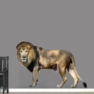"Real Life Lion Printed Wall Decal 60"" wide x 40"" tall Sample Image"