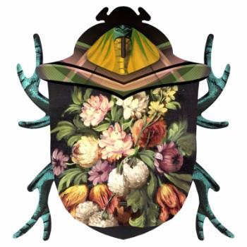 Decorative Beetle - Keith