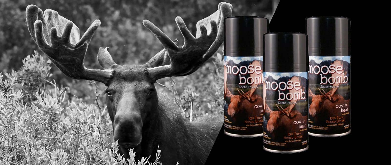 hunting, attractants, scents, cover,  seeds, feed, feeders, bait