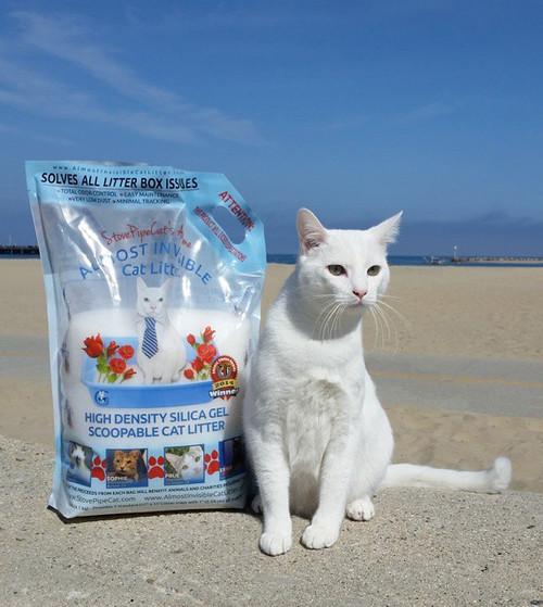 StovePipe The Traveling Cat endoirsing StovePipeCat's Awesome Almost Invisible Cat Litter in Santa Barbara, California
