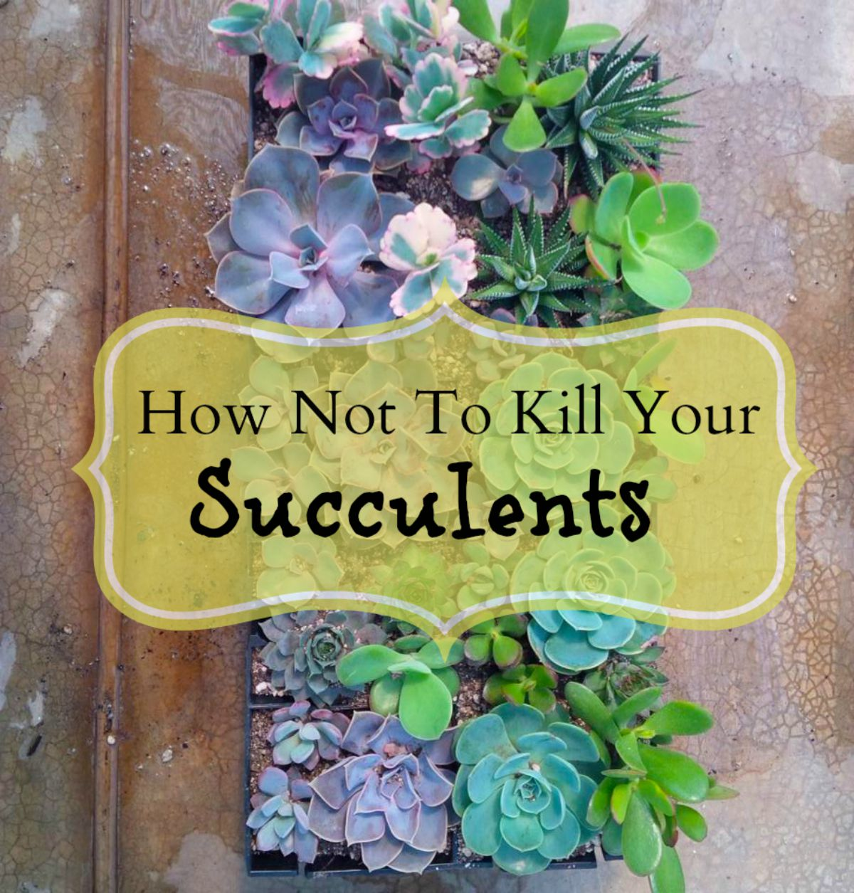 How Not To Kill Your Succulents - Shop Living Walls