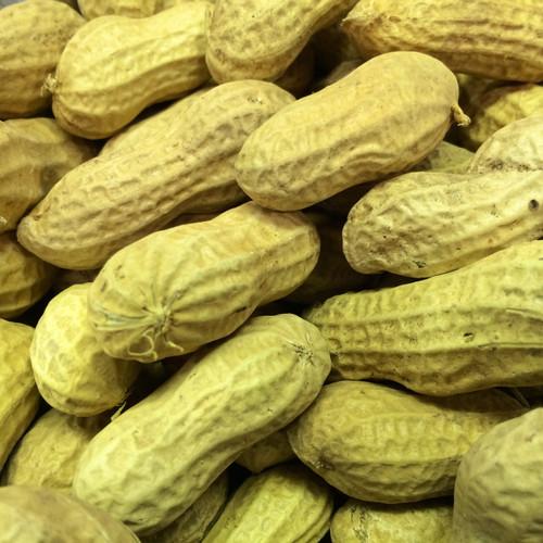 Bird Food Peanuts