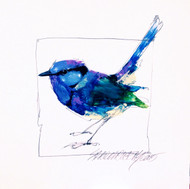 """Splendid Fairywren"" 10x10 original by Sarah Rogers"