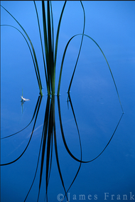 """""""Traces - A Feather on Nymph Lake"""" Photograph by Colorado photographer James Frank. Feather caught on a calm Nymph Lake in Rocky Mountain National Park, Colorado, USA."""