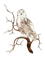 Snow Owl on Branch by Bovano of Cheshire Metal