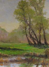 Cottonwood Marsh
