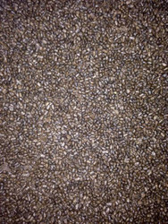 1/2lb Premium Tropical Fish Food 1mm Sinking Pellet