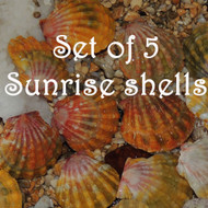 Set of 5 Sunrise shells  #369-333-332-318-317