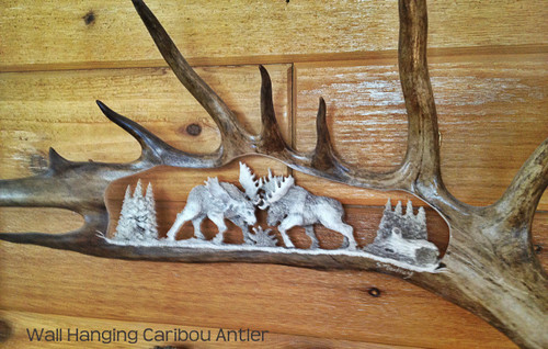 Fighting Bull Moose Antler Carving