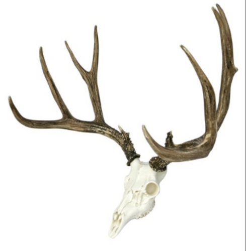 Mule Deer European Mount, Reproduction