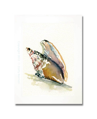 Original Mollusk Shell Watercolor Painting by Dotty Reiman
