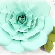 Regina style giant rose
