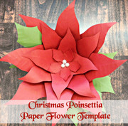 Poinsettia example