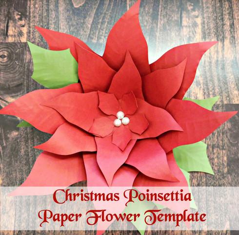 Poinsettia example