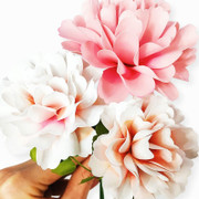 Carnation paper flowers