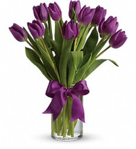 Tulips - Washington DC - Rockville MD – Palace Florists