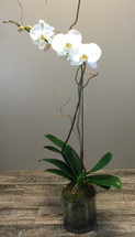 Orchid in glass in Rockville MD, Palace Florists