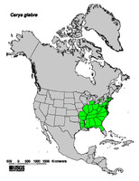 Carya glabra native range map