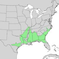 Aesculus pavia USA Native Range Map