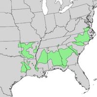 Acer saccharum floridanum USA Range Map