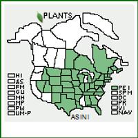 Asclepias incarnata  Swamp Milkweed 1gallon