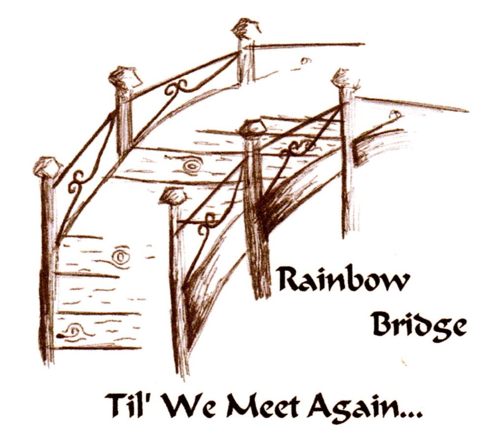 4 Paws Sympathy Card with Tree - Rainbow Bridge