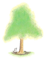 4 Paws Sympathy Card with Tree - Best Friend