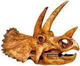 Triceratops - Cretaceous Period - Master's Collection - Dinosaur Fossil Reproduction - Photo Museum Store Company