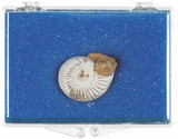 White Ammonite Box, 180 Million Years Old, Madagascar - Actual Authentic Fossil - Photo Museum Store Company