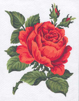 Red Rose Canvas only By Grafitec