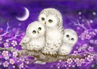 Owl family Canvas only By Grafitec