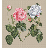 Pink Centifolia Rose & White  Cross Stitch Kit Unique Rose by Stark