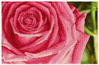 Large Rose Head Cross Stitch Kit