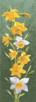 Daffodil Panel Cross Stitch Kit By Heritage