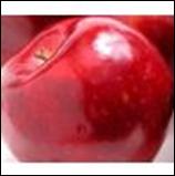 Organic Gala Apples - lb
