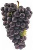 Seedless Black Grapes - lb