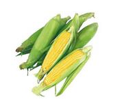 Fresh Corn - ea.