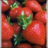 Strawberry Pint