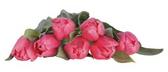 Tulips Bunch