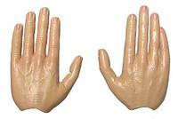 Vladimir Putin: President of Russia - Bendable Hands