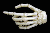 Coo: Skeletons - Left Pointing Hand