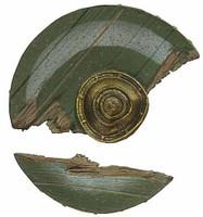 Eowyn - Damaged Shield