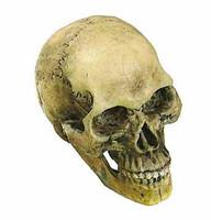 POP Toys: Sherlock - Skull (Moving Jaw)