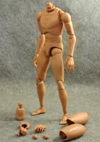ZY Toys Male Wide Shoulders Figure Body Set (ZY-B002)