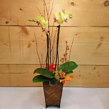 Alluring Orchid Garden (SCF2013)