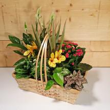 Small Dish Garden (SCF9009)
