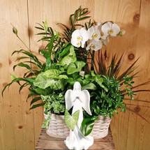 Heavens Garden Basket SCF1055